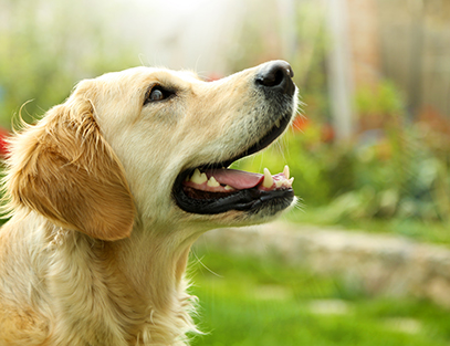 The Golden (Retriever) Rule for Clear Communication
